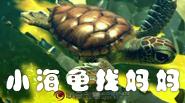 联合创意—3D影片小海龟找妈妈
